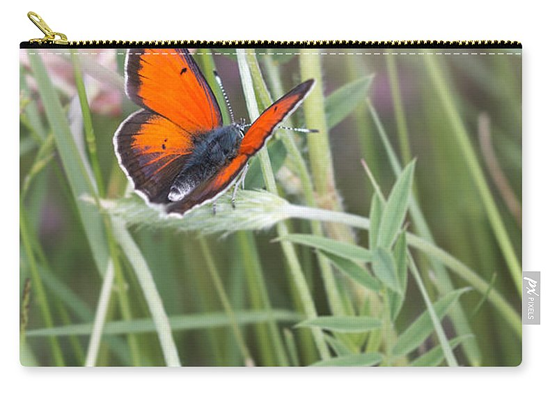 Balkan Copper Butterfly Carry-all Pouch featuring the photograph 02 Balkan Copper Butterfly by Jivko Nakev
