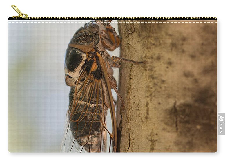 Cicadetta Montana Carry-all Pouch featuring the photograph 02 New Forest Cicada by Jivko Nakev