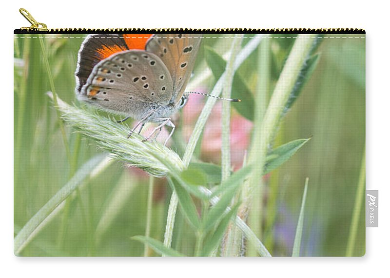 Balkan Copper Butterfly Carry-all Pouch featuring the photograph 03 Balkan Copper Butterfly by Jivko Nakev