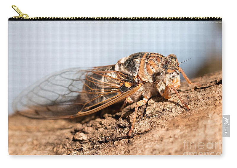 Cicadetta Montana Carry-all Pouch featuring the photograph 05 New Forest Cicada by Jivko Nakev
