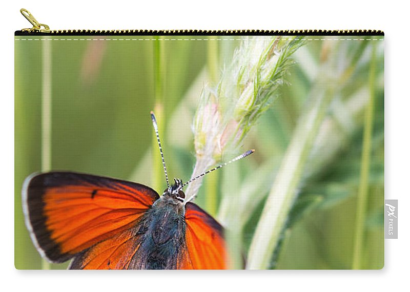 Balkan Copper Butterfly Carry-all Pouch featuring the photograph 07 Balkan Copper Butterfly by Jivko Nakev