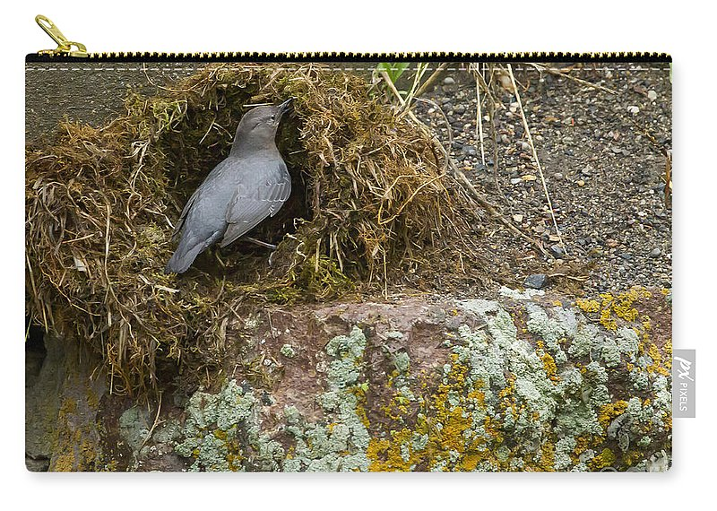 American Dipper Carry-all Pouch featuring the photograph American Dipper Building Nest  #1535 by J L Woody Wooden