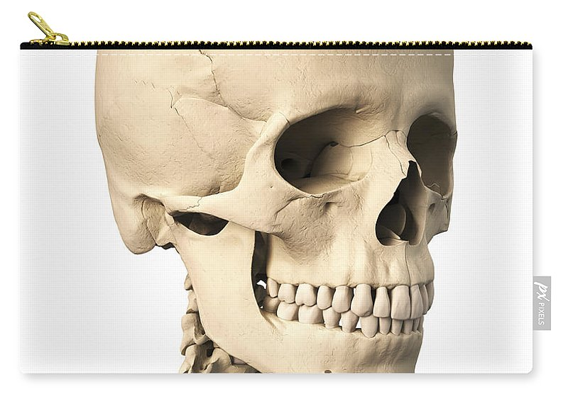 Anatomy Of Human Skull Side View Carry All Pouch For Sale By