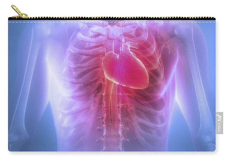 Rib Cage Carry-all Pouch featuring the photograph Anatomy Of The Chest by Science Picture Co