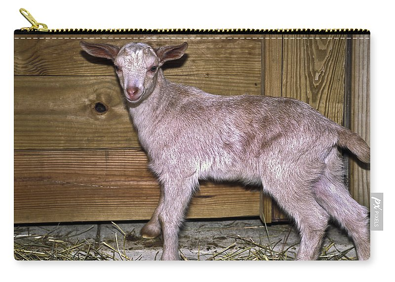 Baby Goat Standing Carry-all Pouch featuring the photograph Baby Goat by Sally Weigand