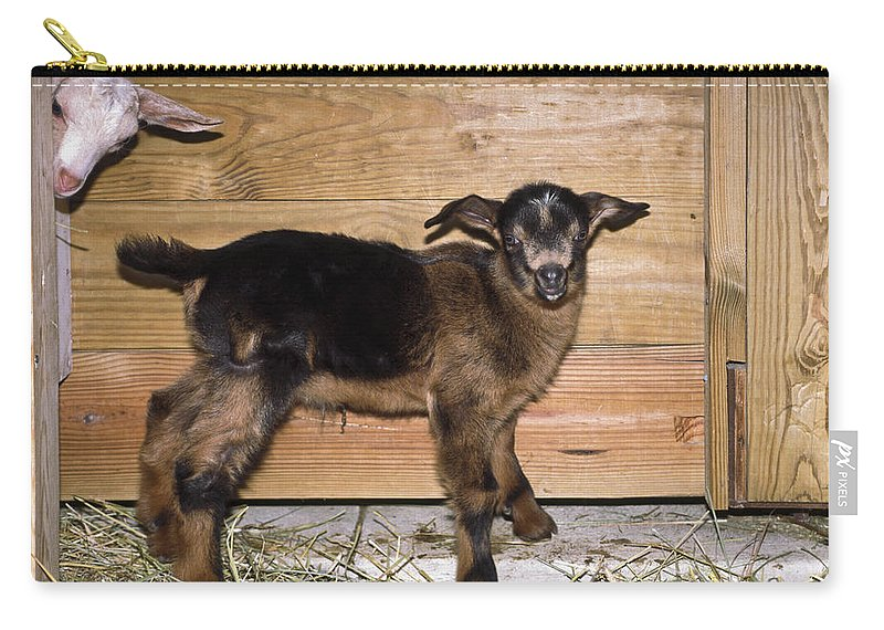 2 Baby Goats Carry-all Pouch featuring the photograph Baby Goats by Sally Weigand