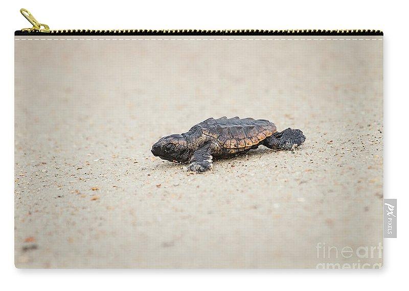 Caretta Caretta Carry-all Pouch featuring the photograph Baby Loggerhead Sea Turtle Amelia Island Florida by Dawna Moore Photography