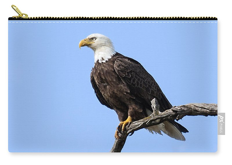 Eagle Carry-all Pouch featuring the photograph Bald Eagle 6 by David Lester