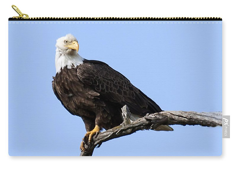 Eagle Carry-all Pouch featuring the photograph Bald Eagle 7 by David Lester