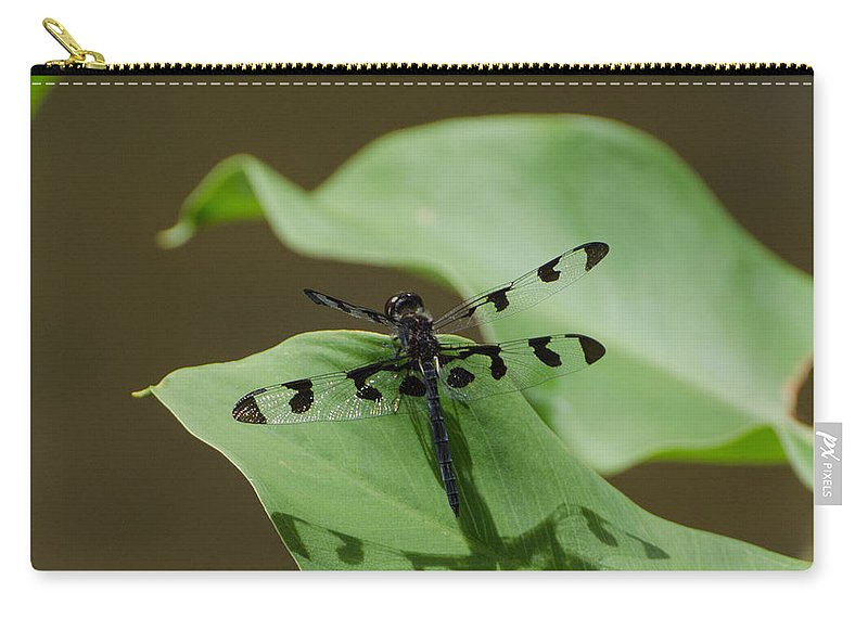 Insect Carry-all Pouch featuring the photograph Banded Pennant Dragonfly by Donna Brown
