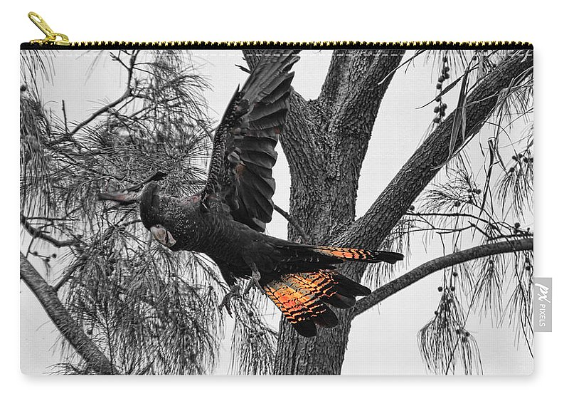 Red Tailed Black Cockatoo Carry-all Pouch featuring the photograph Base Jumper by Douglas Barnard
