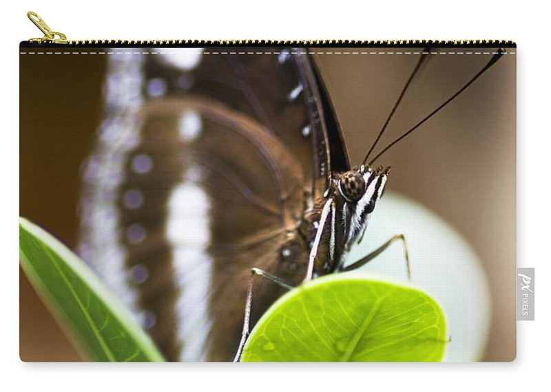 Animal Carry-all Pouch featuring the photograph Beautiful Butterfly by Jorgo Photography - Wall Art Gallery
