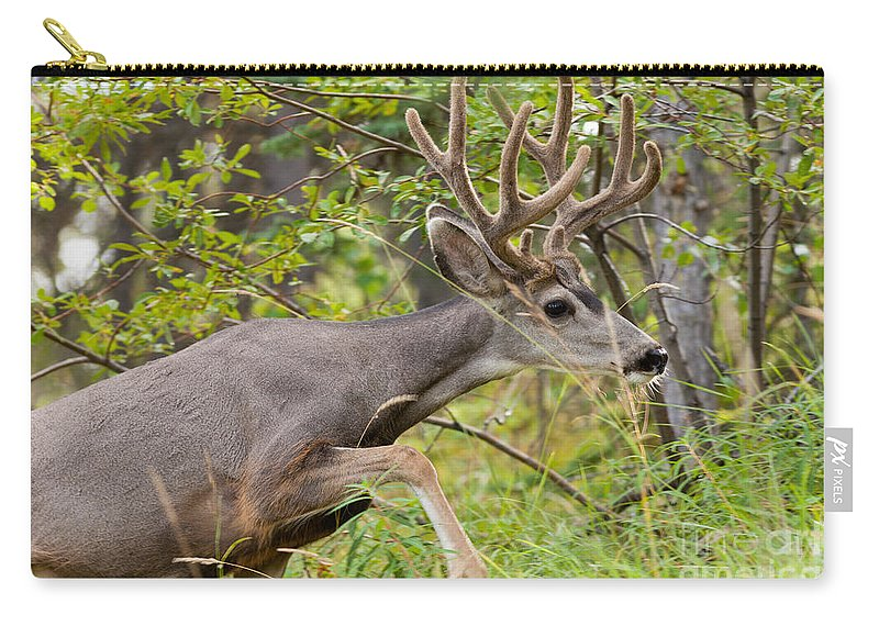 Adult Carry-all Pouch featuring the photograph Beautiful Mule Deer Buck With Velvet Antler by Stephan Pietzko