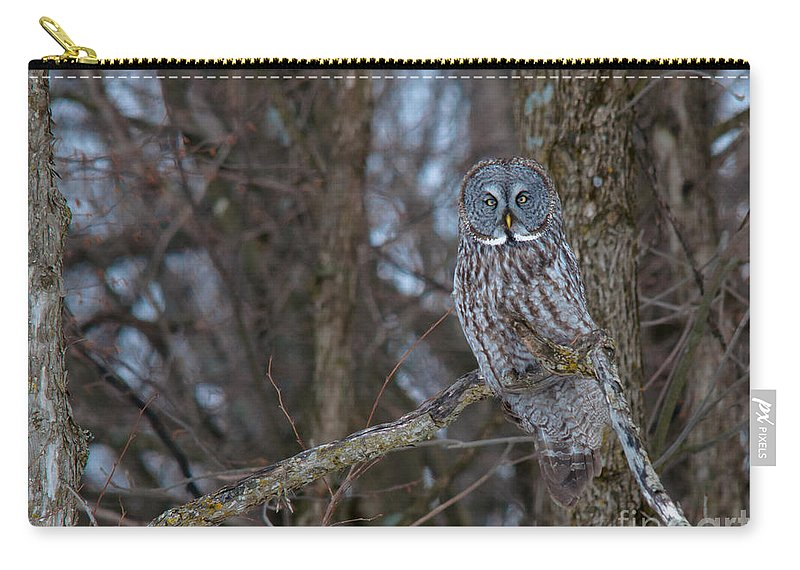 Owls Carry-all Pouch featuring the photograph Beauty by Cheryl Baxter
