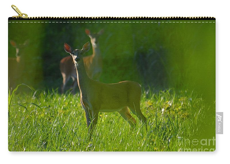 Doe Carry-all Pouch featuring the photograph Behind The Curtain by Deanna Cagle