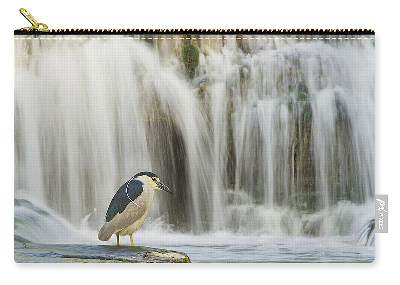 Black-crowned Carry-all Pouch featuring the photograph Black-crowned Night Heron by Mircea Costina Photography