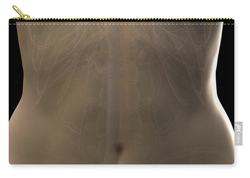Digitally Generated Image Carry-all Pouch featuring the photograph Blood Vessels Of The Thorax Female by Science Picture Co
