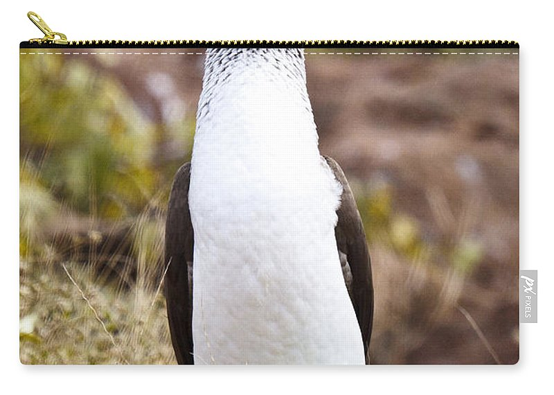 Blue-footed Boobie Carry-all Pouch featuring the photograph Blue Footed Boobie Dancing Galapagos by Jason O Watson