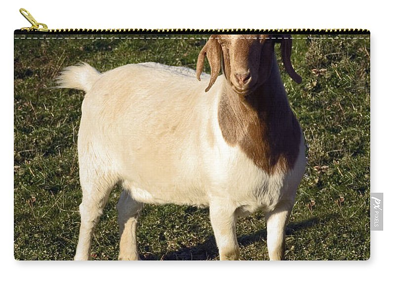 Boer Goat Standing Carry-all Pouch featuring the photograph Boer Goat by Sally Weigand