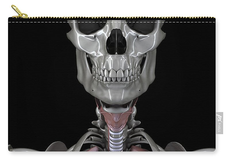 Skeletal System Carry-all Pouch featuring the photograph Bones Of The Head by Science Picture Co
