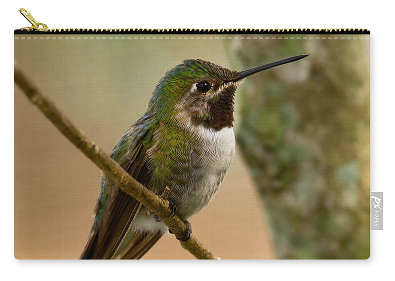 Broad Carry-all Pouch featuring the photograph Broad Tailed Hummingbird by Les Palenik