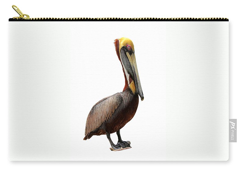 Pelican Carry-all Pouch featuring the photograph Brown Pelican-7 by Rudy Umans