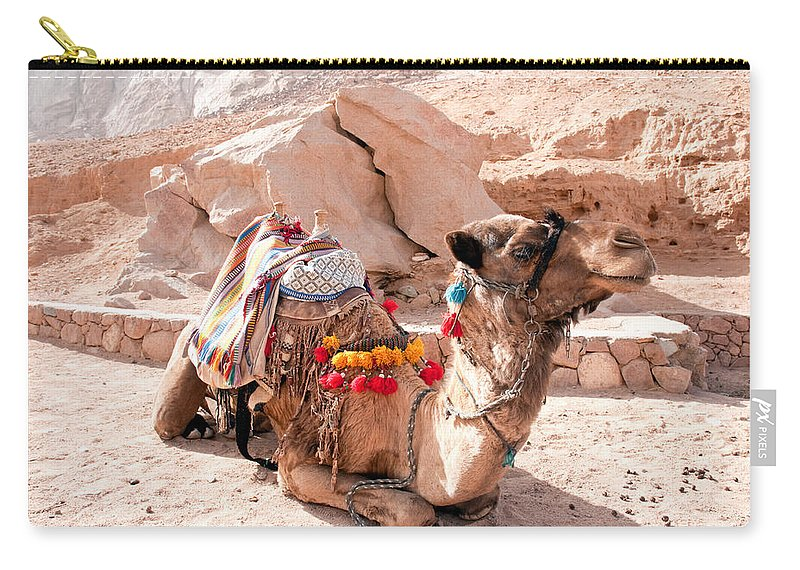 Arab Carry-all Pouch featuring the photograph Sitting Camel by Roy Pedersen
