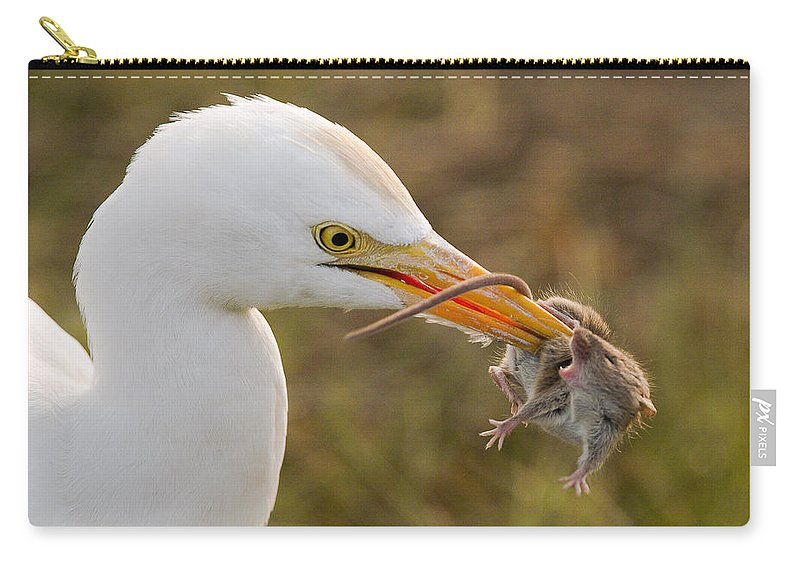 Birds Animals Wildlife Eating Mouse Carry-all Pouch featuring the photograph Cattle Egret by Doug Herr