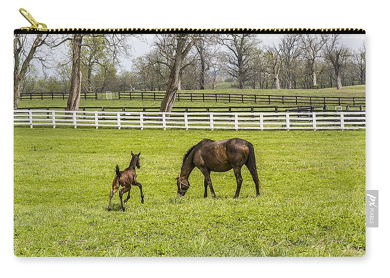 Animal Carry-all Pouch featuring the photograph Colt by Jack R Perry