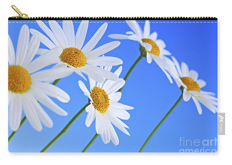 Daisy Carry-all Pouch featuring the photograph Daisy flowers on blue background by Elena Elisseeva