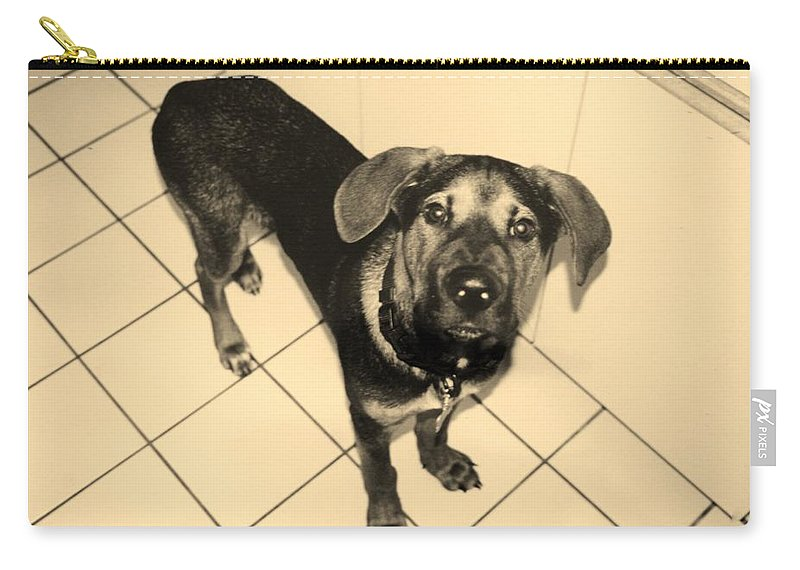 Dog Carry-all Pouch featuring the photograph Dukie by Rob Hans