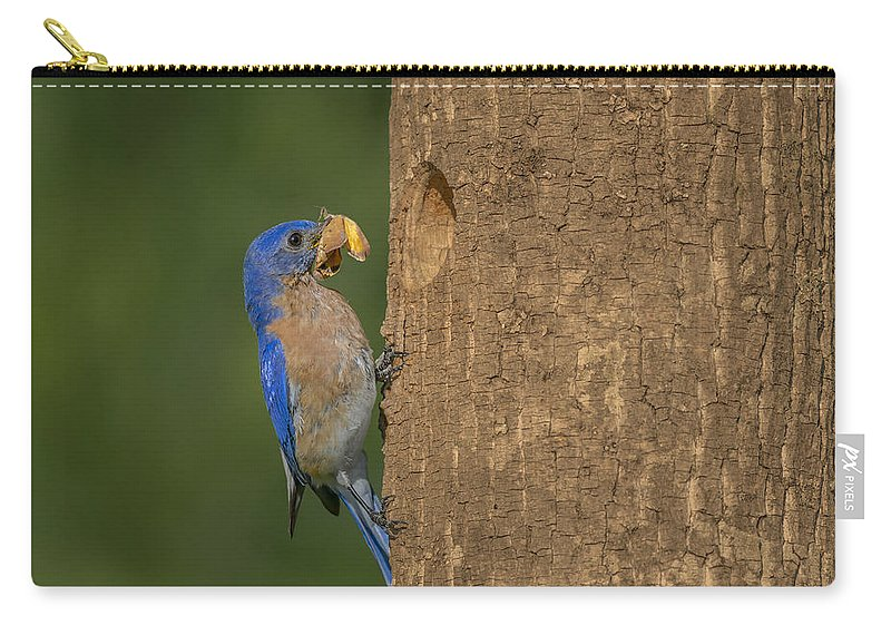 Eastern Bluebird Carry-all Pouch featuring the photograph Eastern Bluebird by Susan Candelario