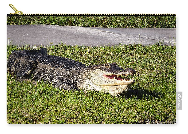 Alligator Carry-all Pouch featuring the photograph Enjoying The Sun by Zina Stromberg
