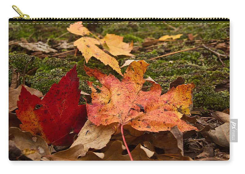 Fall Carry-all Pouch featuring the photograph Fall Moss Carpet by Douglas Barnett