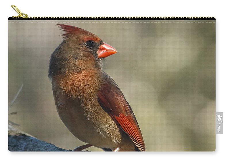 Florida Carry-all Pouch featuring the photograph Female Cardinal by Jane Luxton