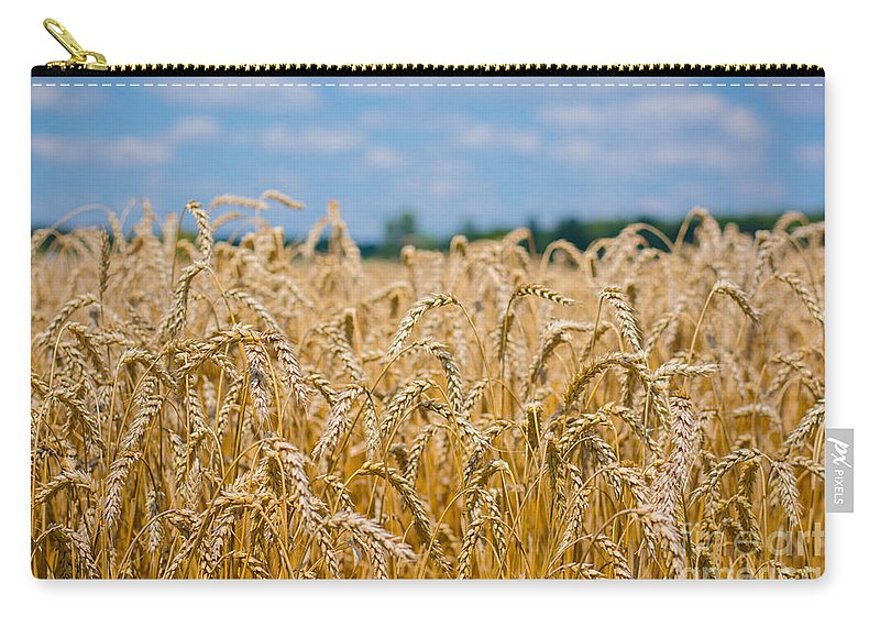 Clouds Carry-all Pouch featuring the photograph Field Of Gold by Cheryl Baxter