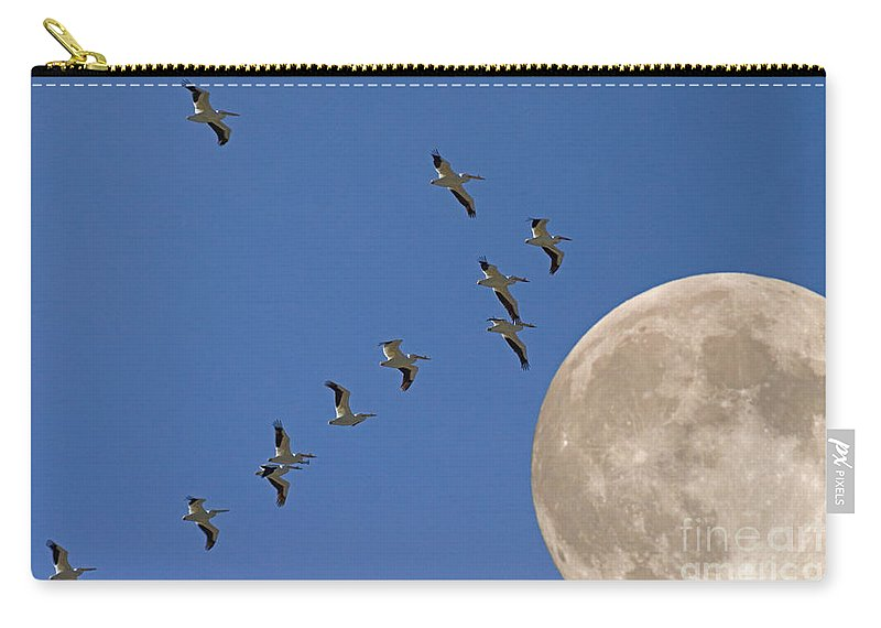 Pelicans Carry-all Pouch featuring the photograph Flying To The Moon by J L Woody Wooden