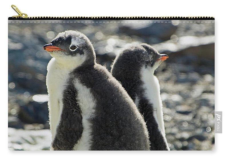 Alertness Carry-all Pouch featuring the photograph Gentoo Penguins Pygoscelis Papua by Jim Julien / Design Pics