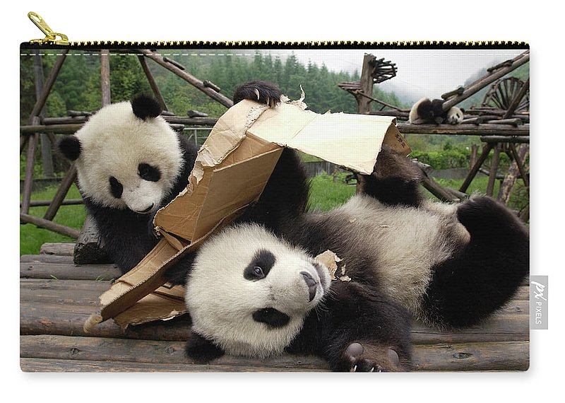Ailuropoda Melanoleuca Carry-all Pouch featuring the photograph Giant Panda Ailuropoda Melanoleuca Pair by Katherine Feng