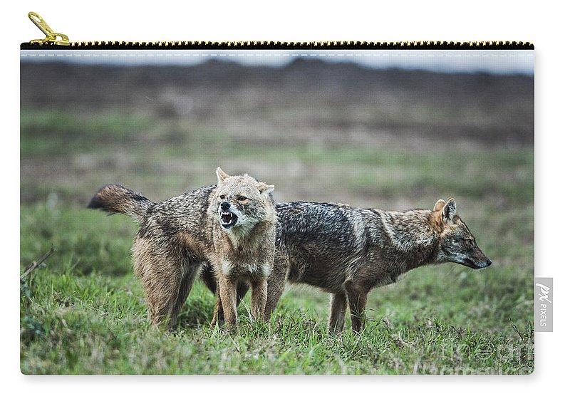 Golden Jackal Carry-all Pouch featuring the photograph Golden Jackal Canis Aureus by Eyal Bartov