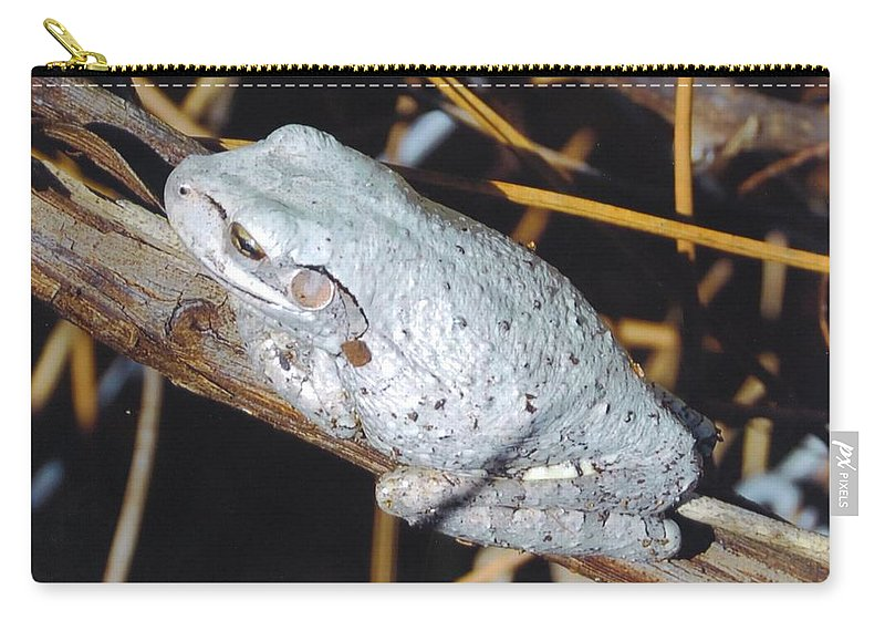 Riding A Branch Carry-all Pouch featuring the photograph Gray Treefrog by Robert Floyd