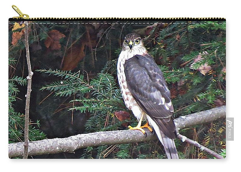 Hawk Carry-all Pouch featuring the photograph Hawk On Branch by MTBobbins Photography