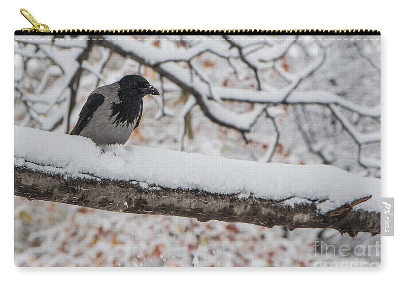 Corvus Cornix Carry-all Pouch featuring the photograph Hooded Crow First Snow by Jivko Nakev