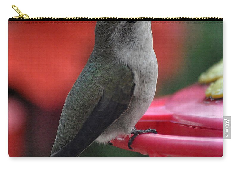 Animal Carry-all Pouch featuring the photograph Hummingbird Anna's On Perch by Jay Milo