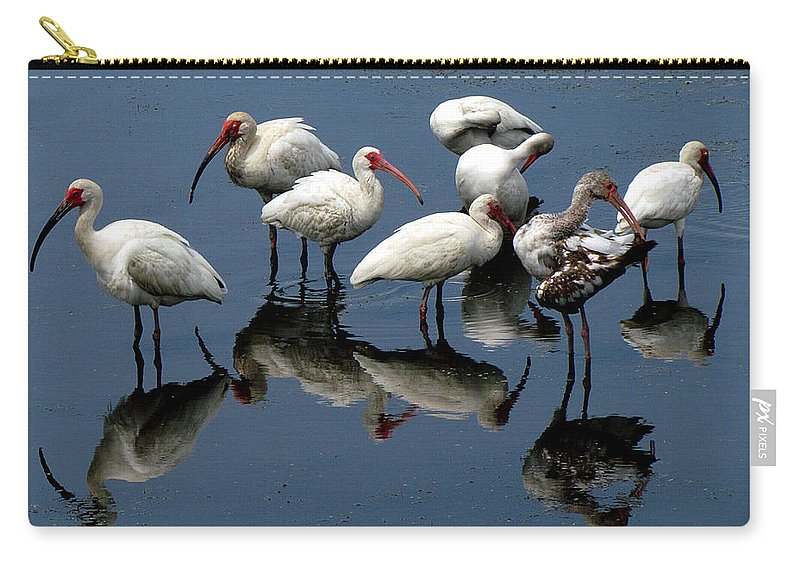 Ibis Carry-all Pouch featuring the photograph Ibis 10 by J M Farris Photography