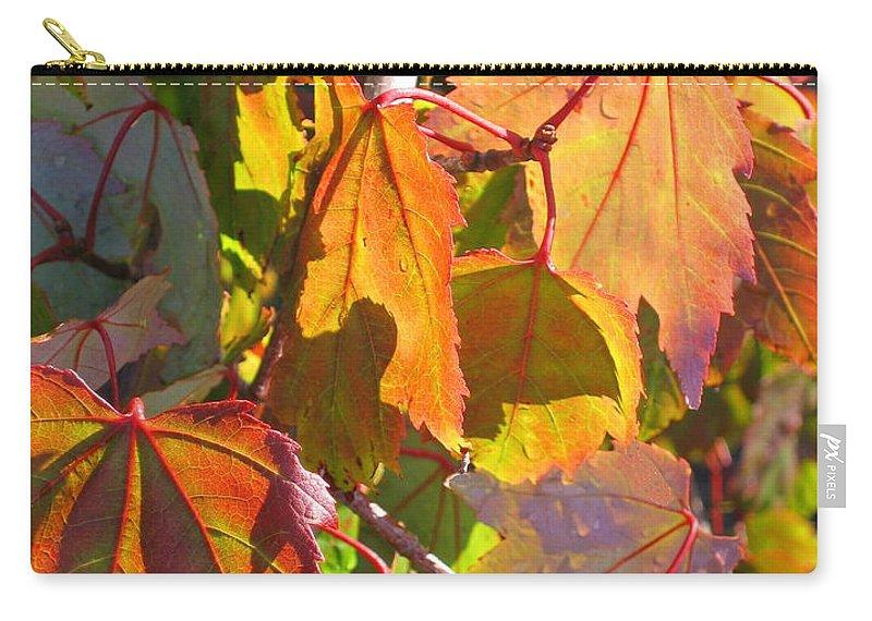 Autumn Carry-all Pouch featuring the photograph Illumining Autumn by Ann Horn
