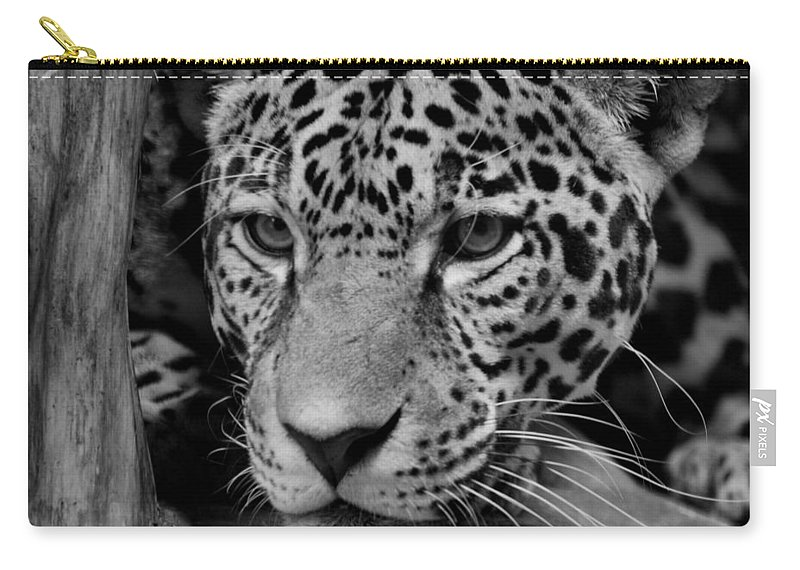 Jaguar Carry-all Pouch featuring the photograph Jaguar In Black And White II by Sandy Keeton