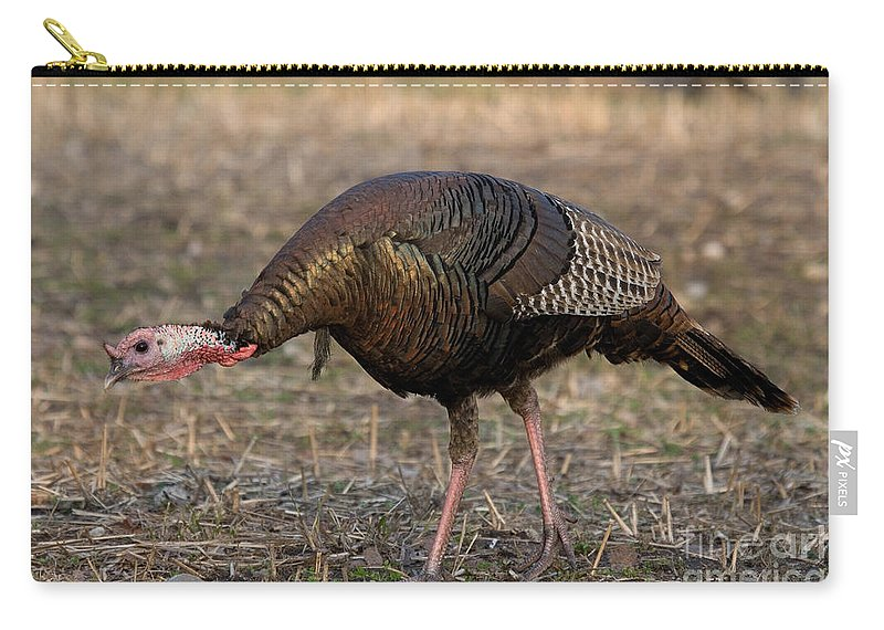 Turkey For Sale >> Jake Eastern Wild Turkey Carry All Pouch For Sale By Linda
