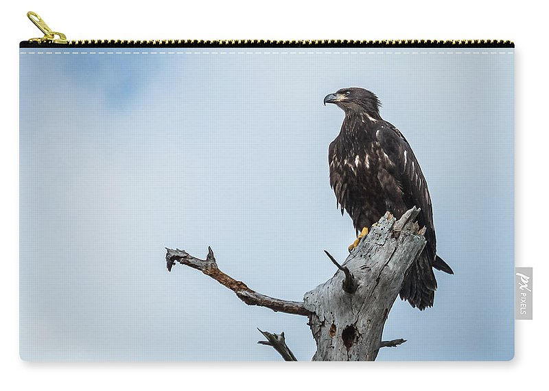Florida Carry-all Pouch featuring the photograph Juvenile Eagle by Jane Luxton