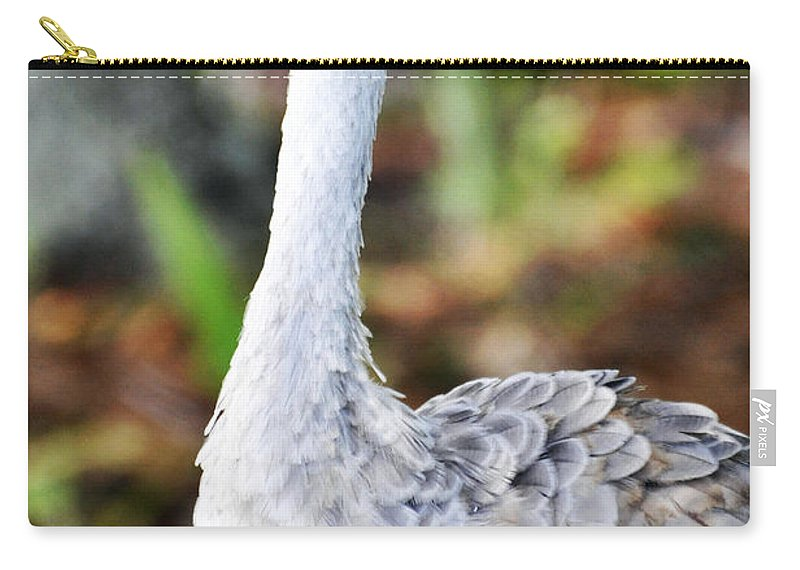 Bird Carry-all Pouch featuring the photograph Juvenile Sandhill Crane Grus Canadensis Pratensis II Usa by Sally Rockefeller
